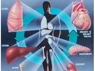 Диэнай Карма, Нейростим Индиго, Хондромарин Криптос, Веномакс Аксиома, 5 элемент, Катарсис  - препараты восстановительной медицины!